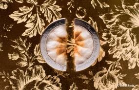 """Grethell Rasúa. De la serie """"Con todo el gusto del mundo"""". Pendientes de algodón con cerumen y plata/2016. (Texto: La paciencia del escucha se encontrará nuevas miradas)"""